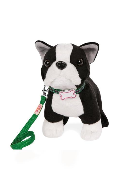 Oyuncak Boston Terrier Yavru Köpek