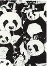 Siyah Beyaz Panda Baskılı Erkek Bebek Pantolon
