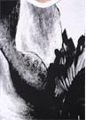 Macro Anemone Siyah Beyaz Baskılı T-shirt